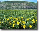 Mule's ears, Uinta National Forest